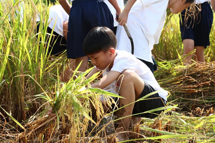 小知青下乡夏令营 活动相片